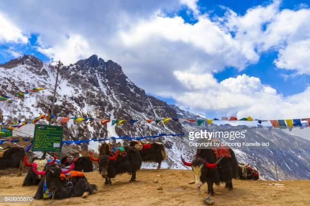 Sikkim 12th Result 2020 - Sikkim State Board HSC Result/Score Card  & Marksheet 1